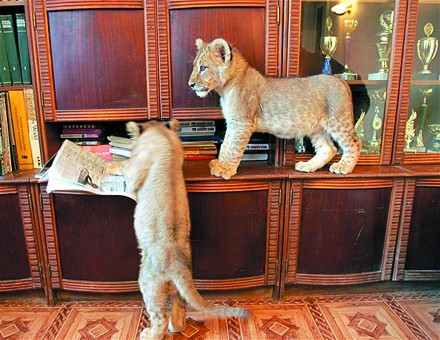 Sıradışı Evcil Hayvanlar 3