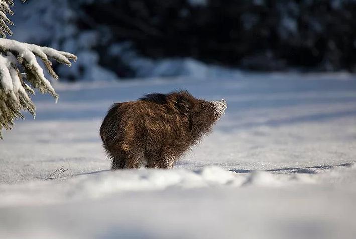 Kış ve Hayvanlar 1