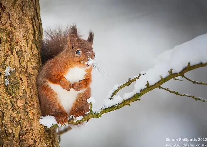 Kış ve Hayvanlar 13