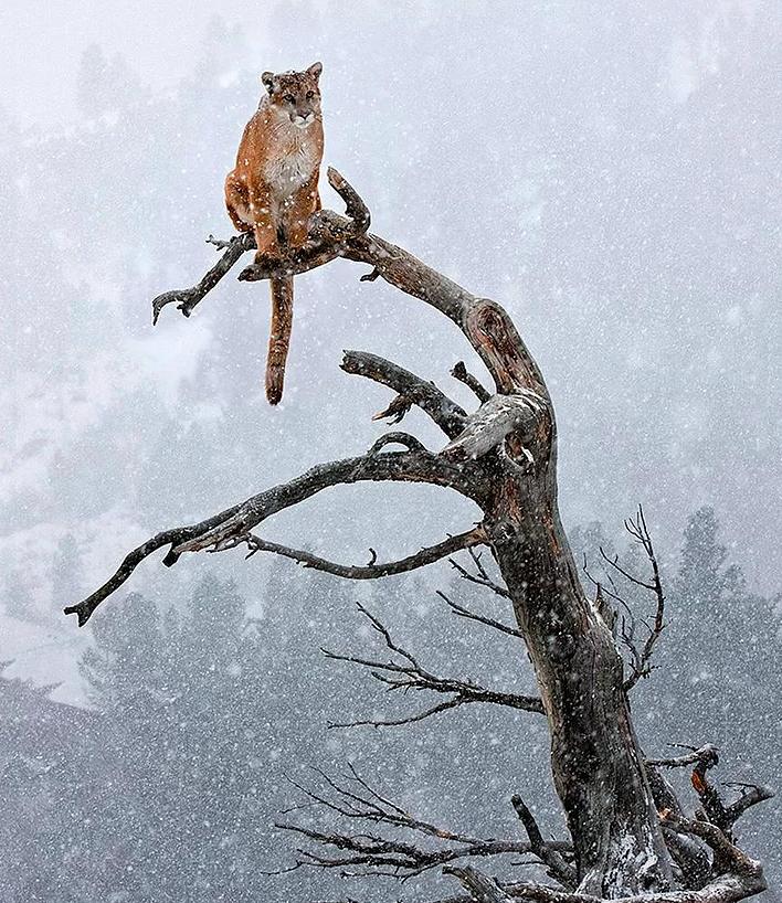 Kış ve Hayvanlar 14