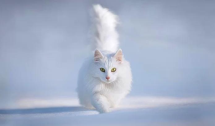Kış ve Hayvanlar 17
