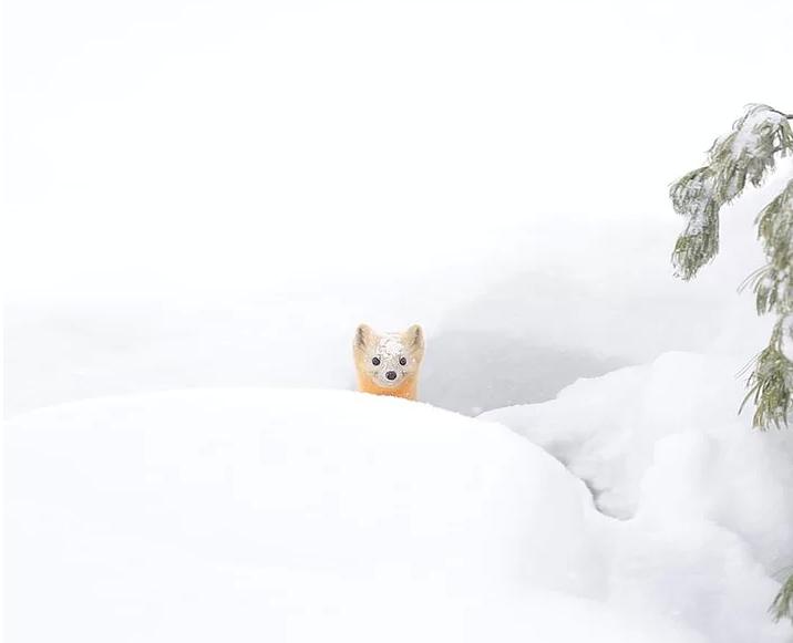 Kış ve Hayvanlar 7