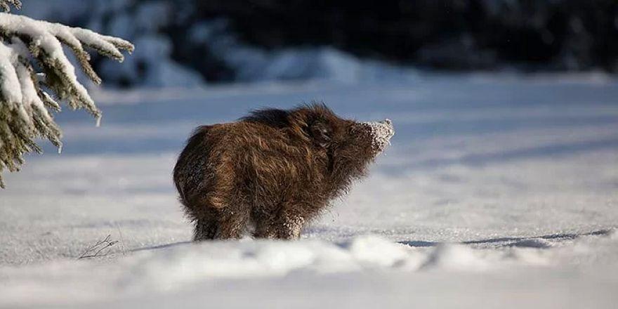 Kış ve Hayvanlar