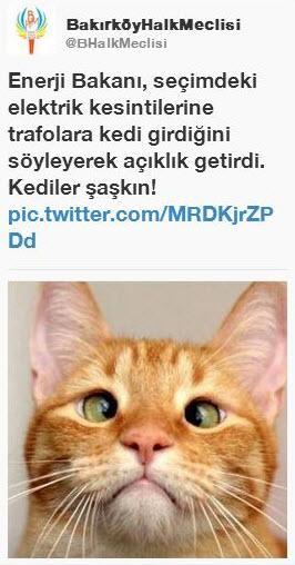Sosyal medyada 'kedidir kedi' sarsıntısı 11