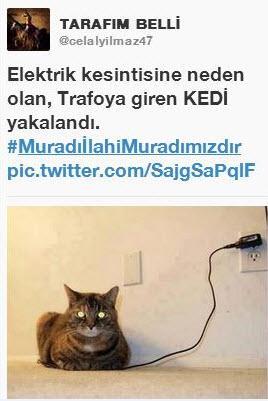 Sosyal medyada 'kedidir kedi' sarsıntısı 13