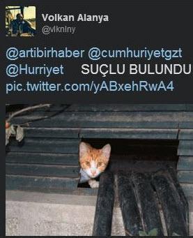 Sosyal medyada 'kedidir kedi' sarsıntısı 3