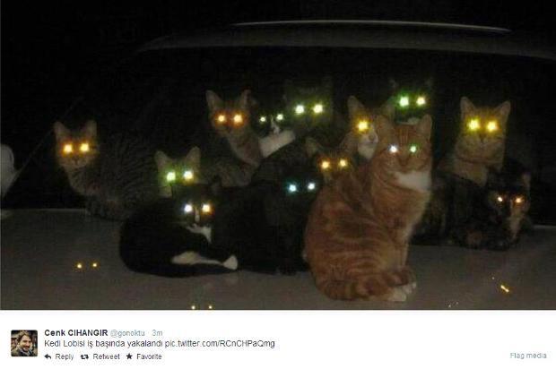 Sosyal medyada 'kedidir kedi' sarsıntısı 6