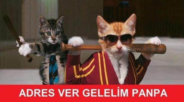 Sosyal medyada 'kedidir kedi' sarsıntısı 8