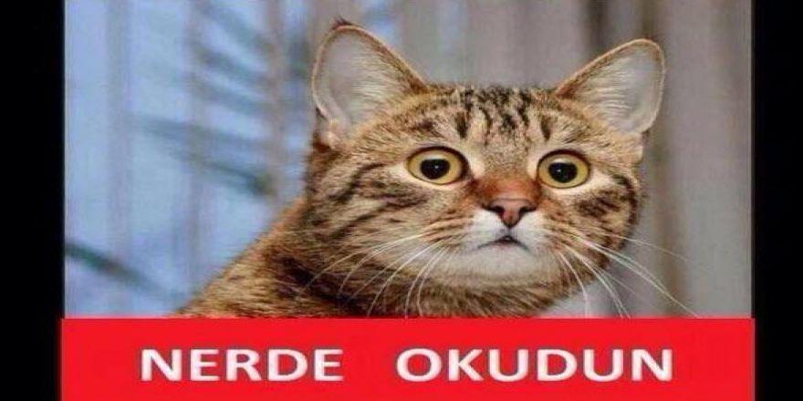 Sosyal medyada 'kedidir kedi' sarsıntısı