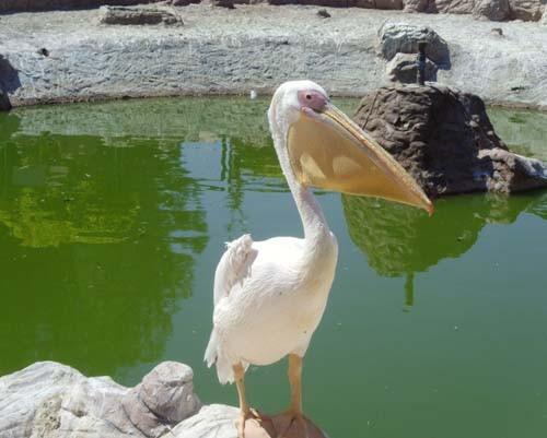Gaziantep Hayvanat Bahçesi 2