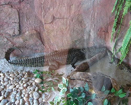 Gaziantep Hayvanat Bahçesi 21
