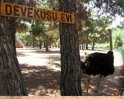 Gaziantep Hayvanat Bahçesi 29