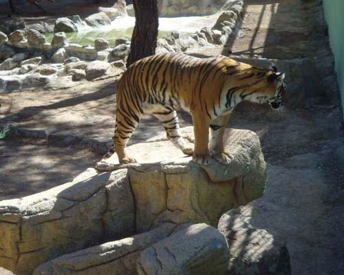 Gaziantep Hayvanat Bahçesi 4