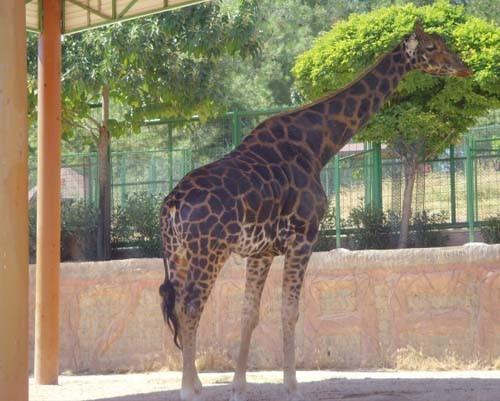 Gaziantep Hayvanat Bahçesi 5