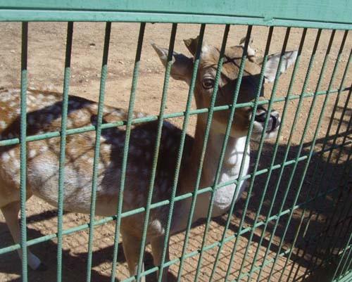 Gaziantep Hayvanat Bahçesi 8