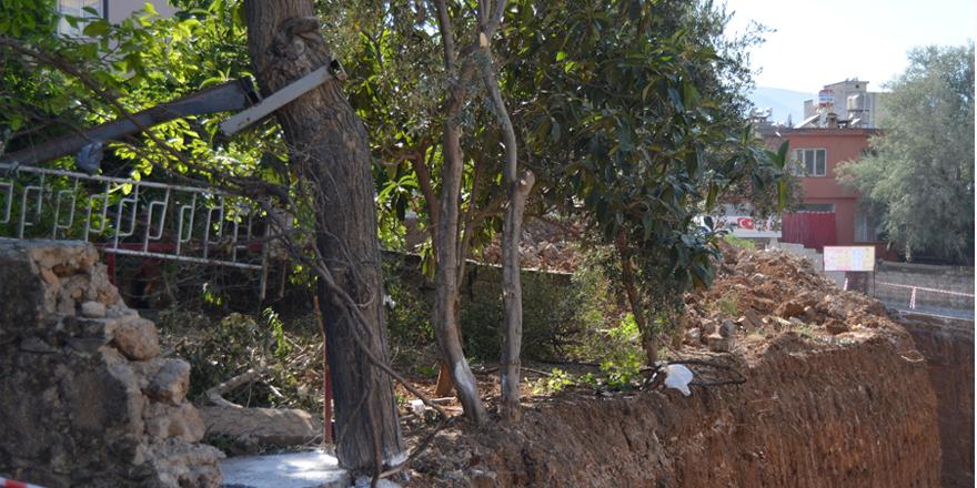 50 yıllık dut ağacı kurtarıldı