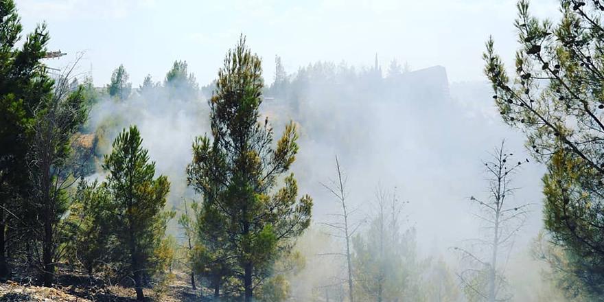 Orman yangınında 5 hektar alan zarar gördü