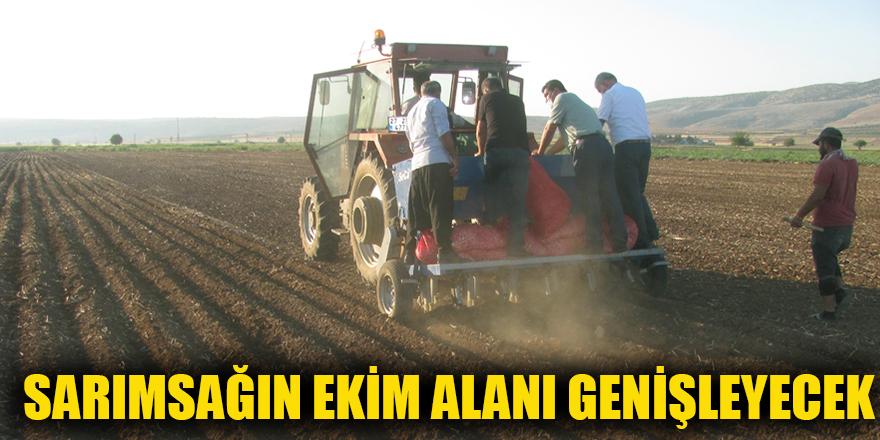 Sarımsağın ekim alanı genişleyecek