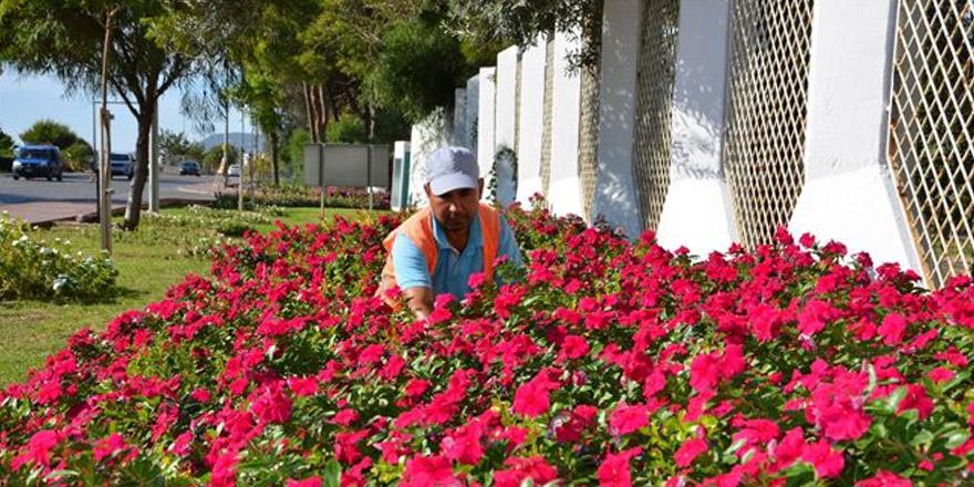 Mevsimlik çiçek satın alacak