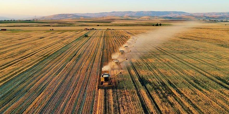 Organik üretim ve tüketimi artıyor