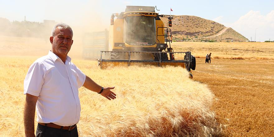 Araban buğdayında hasat başladı