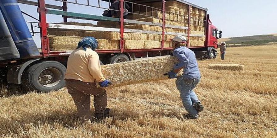 Buğday sapı satılacak