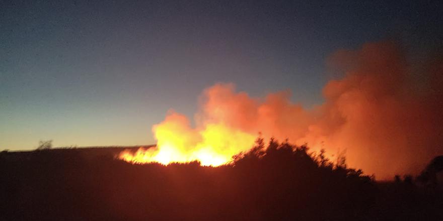 Nizip'te orman yangını  200 dönüm alan kül oldu