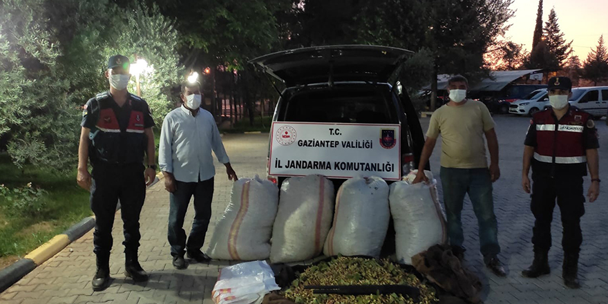 Fıstık hırsızları tutuklandı