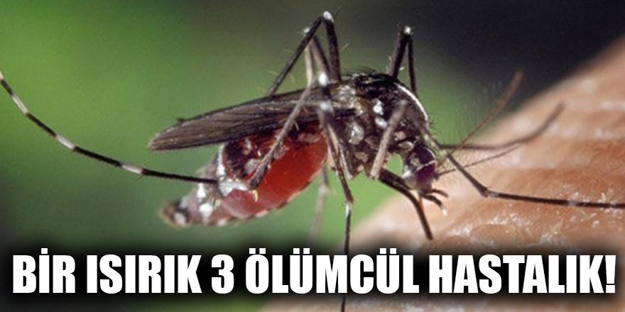 Bir ısırık 3 ölümcül hastalık!