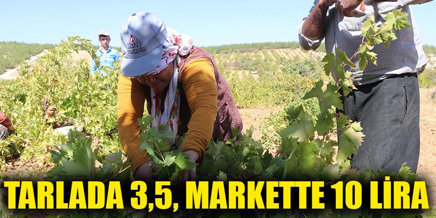 Tarlada 3,5, markette 10 lira