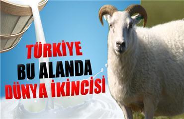 Türkiye bu alanda dünya ikincisi