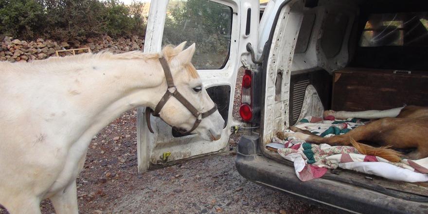 Anne at ile yavrusu duygulandırdı