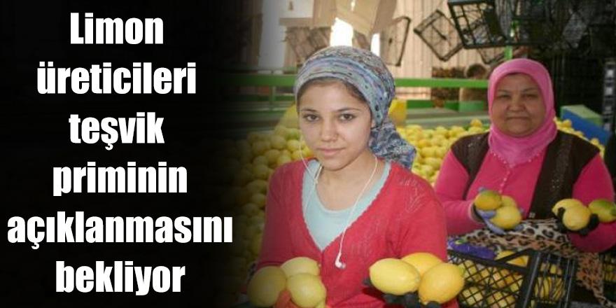 Limon üreticileri teşvik priminin açıklanmasını bekliyor