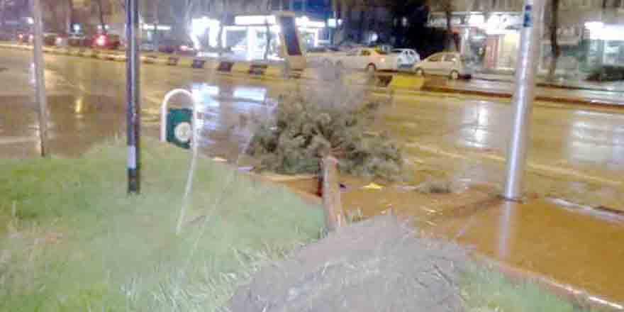 Fırtına ağaçları kökünden söktü