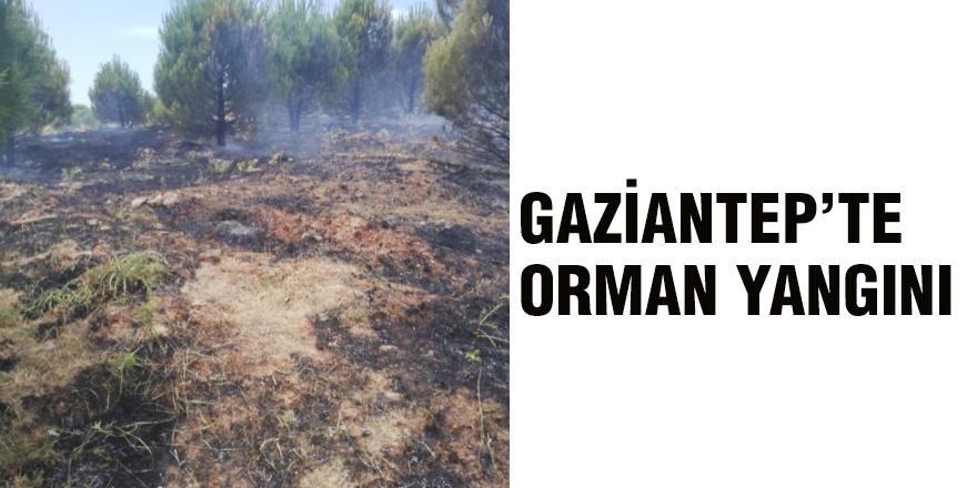 GAZİANTEP'TE ORMAN YANGINI KORKUTTU