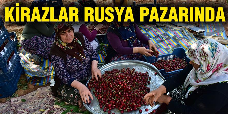 Kirazlar Rusya pazarında