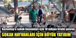 Gaziantep'e sokak hayvanları için 10 milyon liralık yatırım