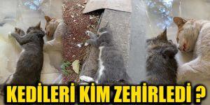 Kedileri kim zehirledi ?