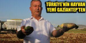Türkiye'nin hayvan yemi Gaziantep'ten
