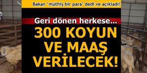 Köyüne geri dönene 300 koyun + maaş