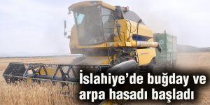 İslahiye'de buğday ve arpa hasadı başladı