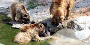 Sıcaktan bunalan hayvanlara buzlu kokteyl