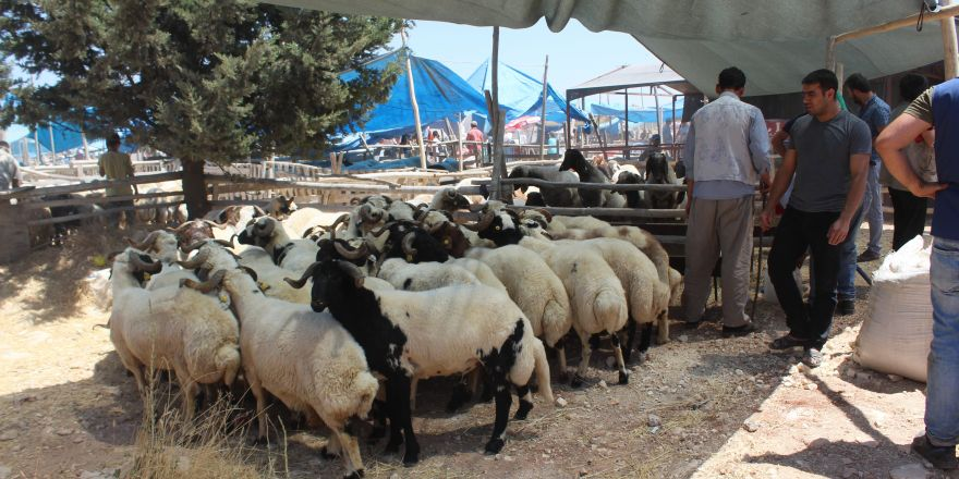 Gaziantep'te kurban pazarlarında yoğunluk yaşanıyor