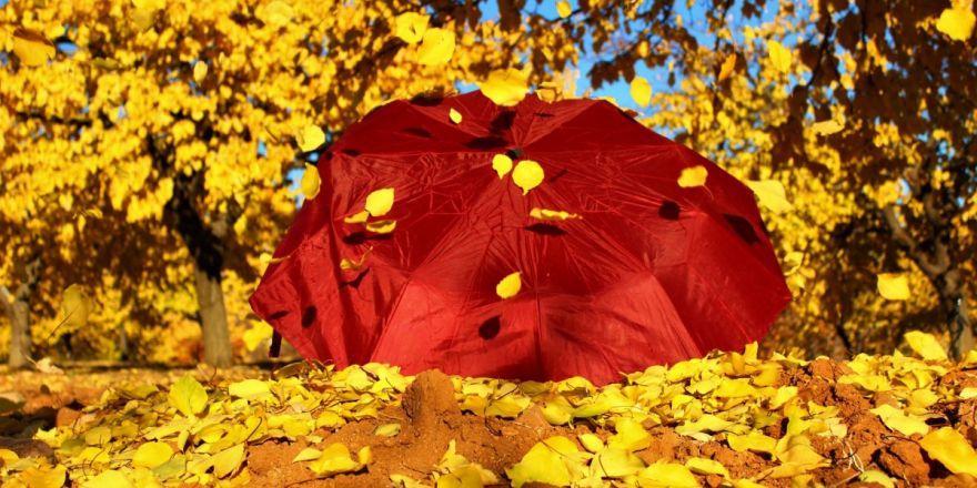 Elazığ'da 'altın yaprakların' görsel şöleni