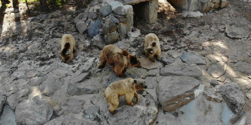 Gaziantep'te ayılar kış uykusunu unuttu