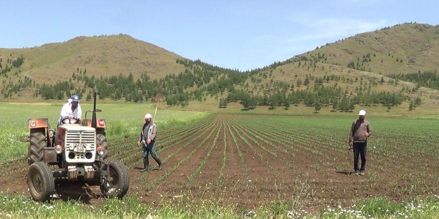 Kısıtlamadan muaf çiftçiler sıcağa rağmen iş başında