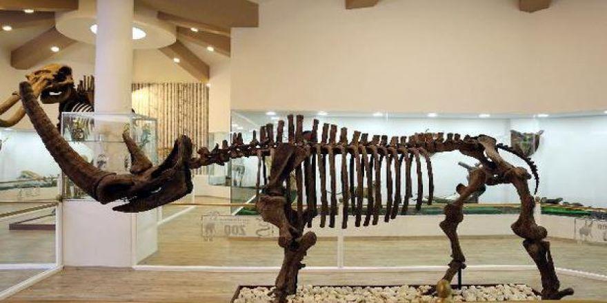 Türkiye'nin ilk 'zooloji' ve 'doğa' müzesi açılıyor