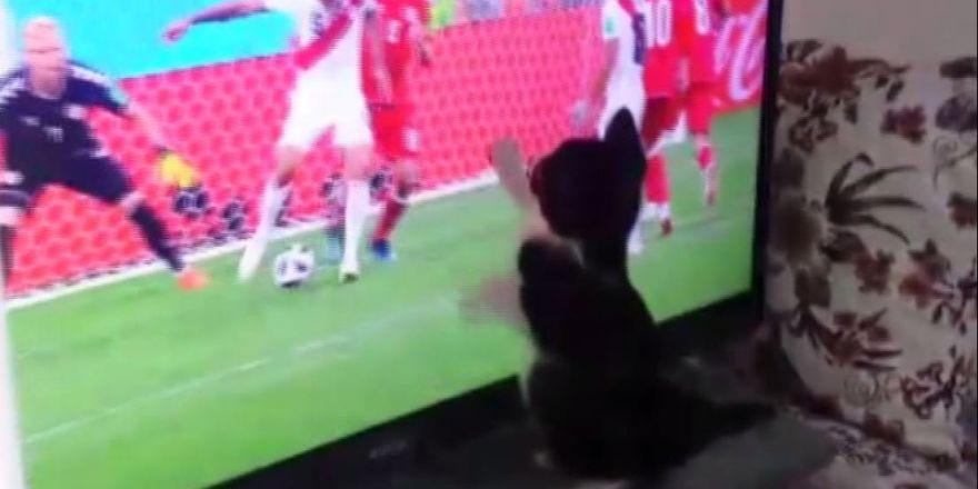 Fanatik kedinin Dünya Kupası heyecanı