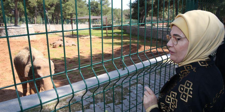 Emine Erdoğan, eşine hediye edilen aslanları gördü