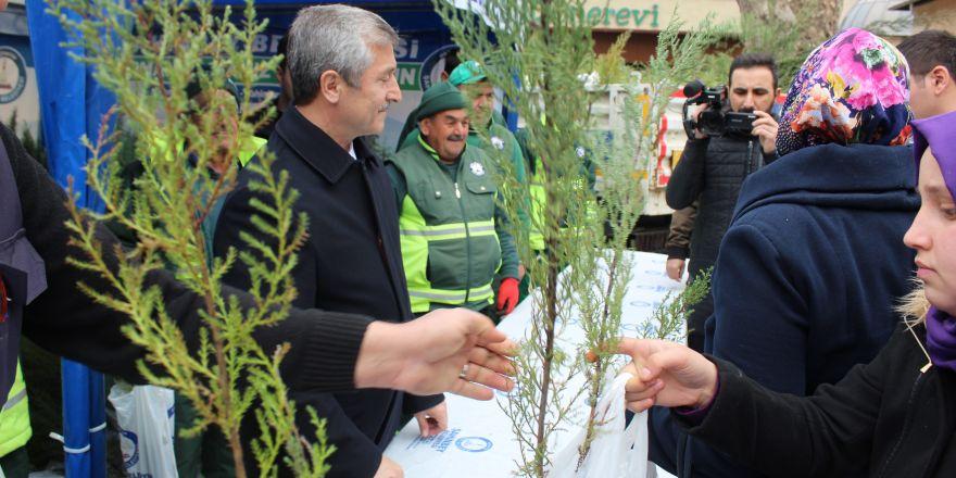 Şahinbey'de 150 bin çam fidanı dağıtıldı